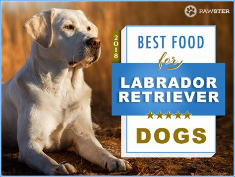 best food for lab puppies top 6 recommended best foods for labrador retrievers