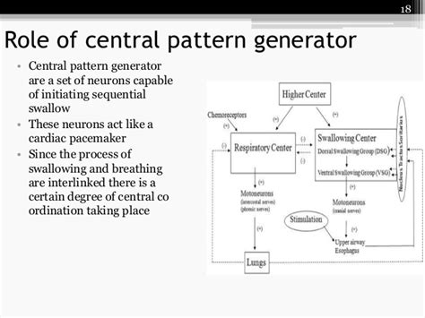 central pattern generator vomiting physiology of deglutition by roohia
