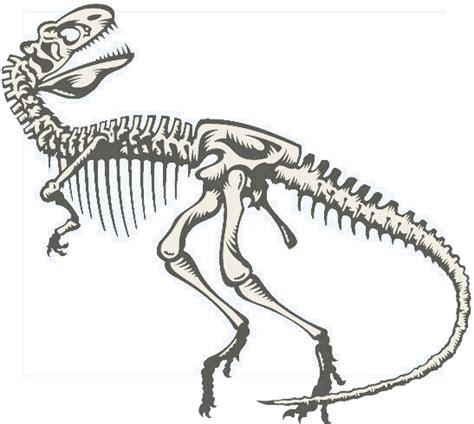 Who Find Dinosaur Bones Image Gallery Dinosaur Bones