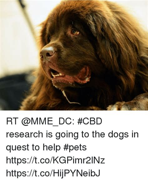 going to the dogs rt cbd research is going to the dogs in quest to help pets httpstcokgpimr2lnz