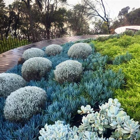 australian garden ideas 25 beautiful coastal gardens ideas on coastal