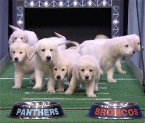 jimmy fallon puppy predictor jimmy fallon s puppy predictors choose a bowl winner