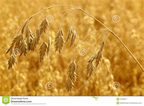 Crop Abstrac cereal crop abstract stock image image of industry