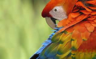 colorful parrots colorful parrots wallpapers hd wallpapers