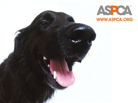 aspca puppies aspca wallpaper against animal cruelty wallpaper 4484577 fanpop
