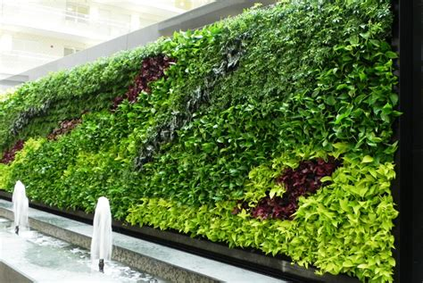 green wall biowall vertical garden green walls