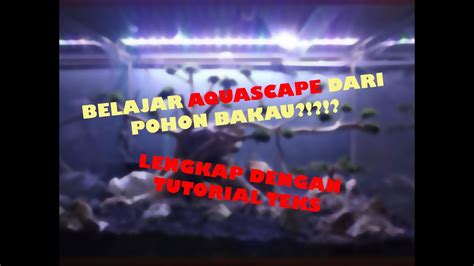 belajar aquascape  pohon bakau tutorial lengkap