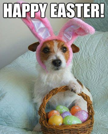 Hilarious Easter Memes - funniest happy quot easter memes quot pictures jesus easter