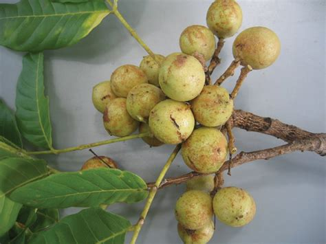 cropfruits
