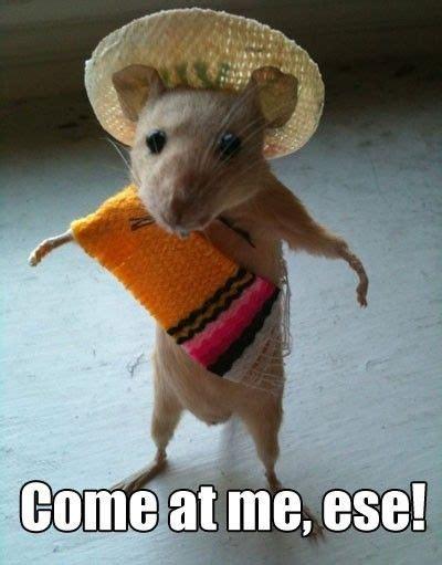 Mouse Meme - 12 adorable mouse memes
