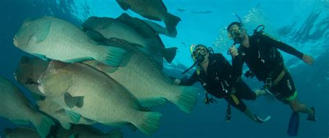 dive resorts resort scuba diving cairns liveaboard