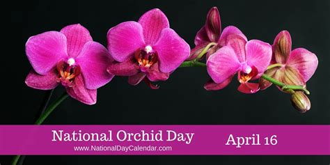is today national day today is national orchid day south florida reporter