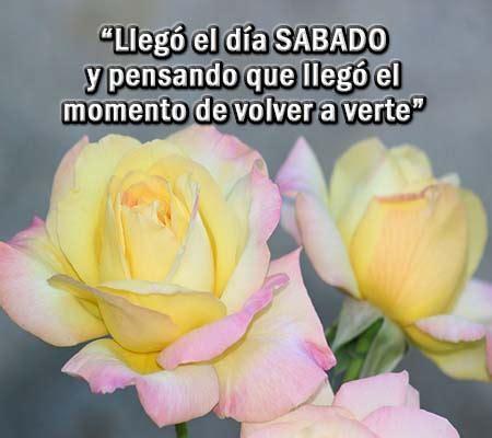 feliz sbado de flores imgenes con frases para compartir en imagenes de rosas con frases de feliz sabado rosas de amor