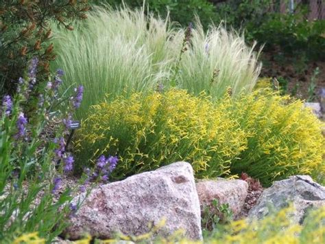 152 best images about colorado landscaping on pinterest gardens colorado springs and drought