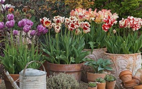 spring pots  brighten   garden
