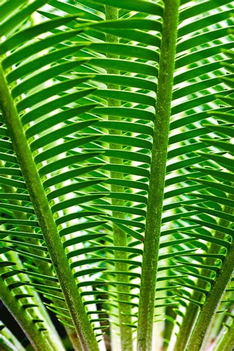 leaves pattern photography best 25 patterns in nature ideas on pinterest
