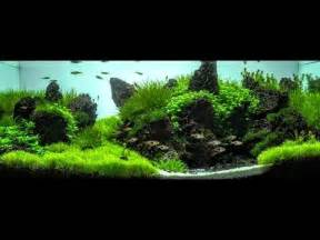 how to create depth and balance within your aquarium
