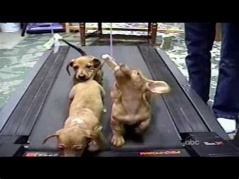 cute dogs americas funniest home  afv youtube