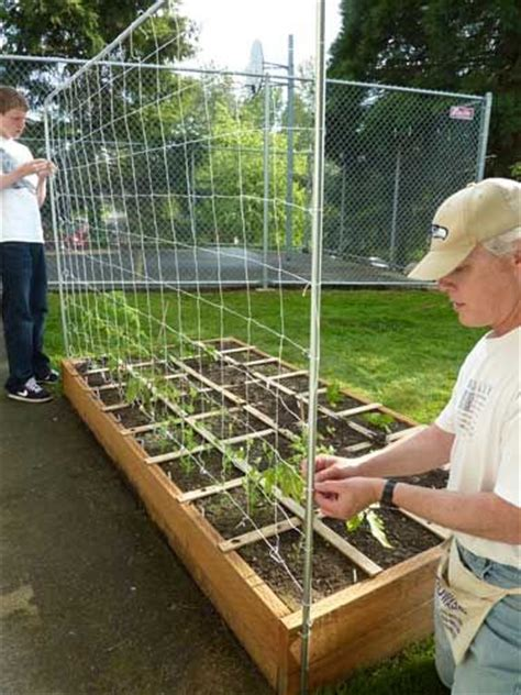 how to build a trellis 49 best diy garden beds images on pinterest gardening