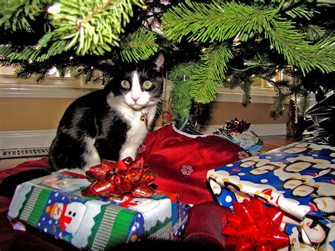 cat repellent for christmas tree toronto city 187 the repellent scent of and other tidings of