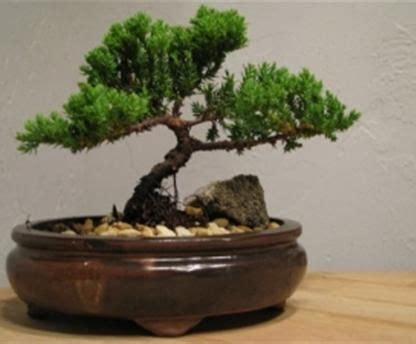 best grow light for bonsai 17 best images about the led grow light evolved on