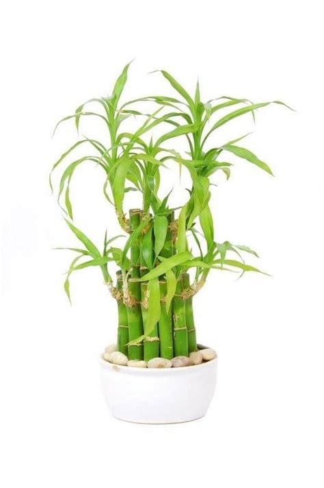 5 hardy hard to kill houseplants for apartments with low house plants hardy photos
