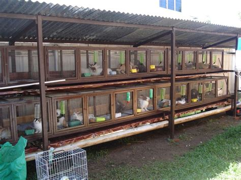 plans to build a rabbit hutch for outside how to build a large outdoor rabbit hutch woodworking