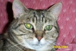 Come Eliminare Gechi E Lucertole by Cimitero Per Animali Pets Cemetery Pagina 28
