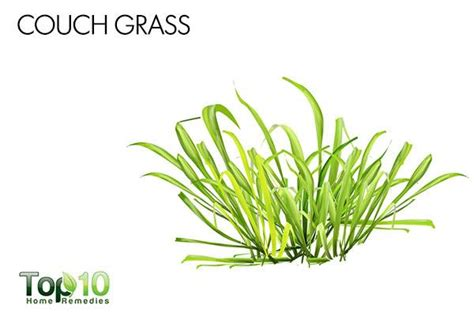 couch grass herb how to treat cystitis in cats page 2 of 3 top 10 home