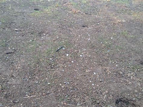 Unkraut Im Rasen Vernichten 20 by Unkraut Auf Dem Rasen Unkraut Auf Dem Rasen Garten