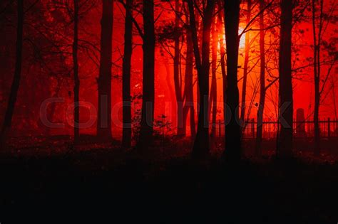 dark forest night image1 jpg scary foggy forest silhouettes of trees in the red light