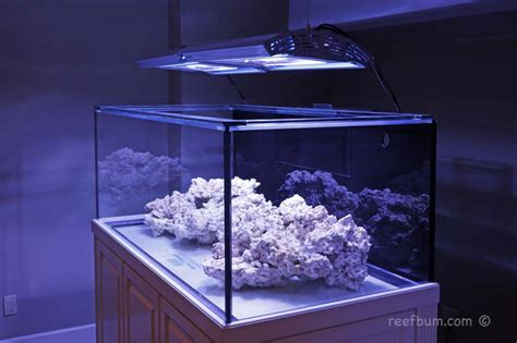 metal halide aquarium light review coast to coast custom aquariums frag tank