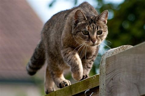 keep cats in backyard how to keep cats out of your backyard outdoor goods
