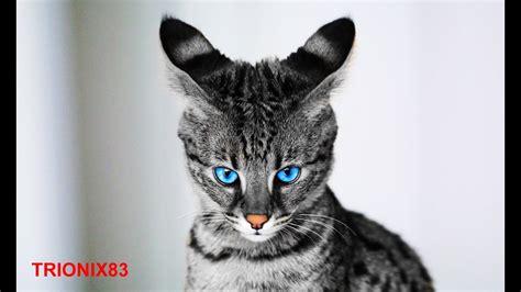 imagenes de cumpleaños lindos los animales mas bonitos del mundo los animales mas