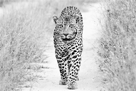 imagenes lindas blanco y negro la belleza animal en blanco y negro taringa