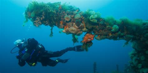 best dive locations the best dive in canada scuba diver