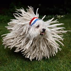 puppy of the day picture of the day not sure if or mop 171 twistedsifter