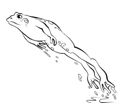 jumping frog coloring page coloring page of fish jumping frog pages clipart panda