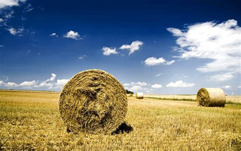 field hay wheat haystack wallpapers hd wallpapers 71914