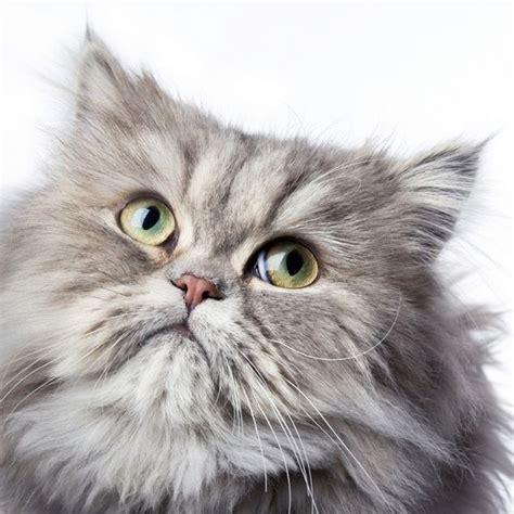 spray kucing home