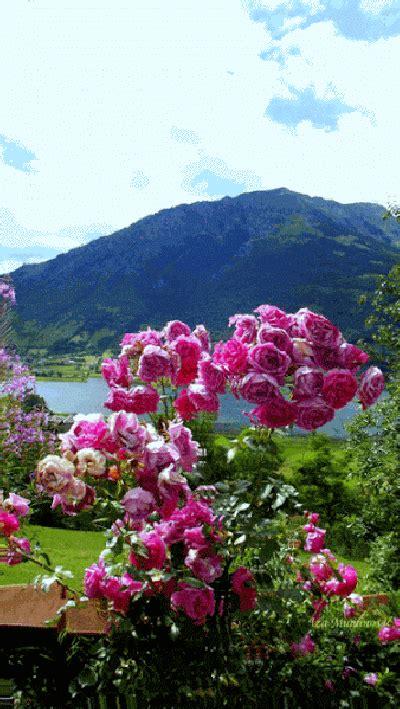 imagenes jardines japoneses movimiento imagenes animadas de jardines con flores para whatsapp