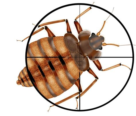 bed bugs detection bed bug elimination pronto pest management