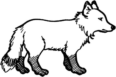 arctic fox drawing coloring pages