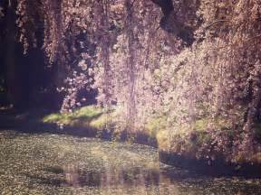 spring photography images amp pictures becuo