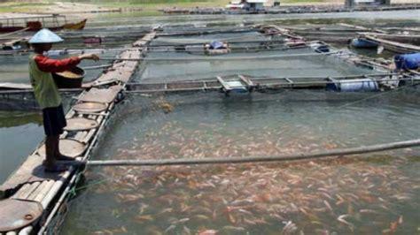 Bibit Lele Balikpapan pemerintah balikpapan galakkan budidaya ikan air tawar