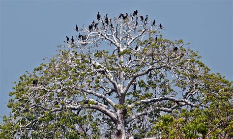 pulau rambut menikmati burung di alam liar klub burung