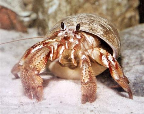 do hermit crabs need a heat l buy parrots and exotic pets parrots of the world pet