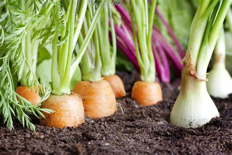 vegetable families soil depletion and crop rotation