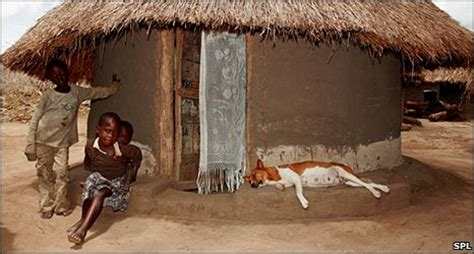 dogs in africa news science environment domestic origins challenged