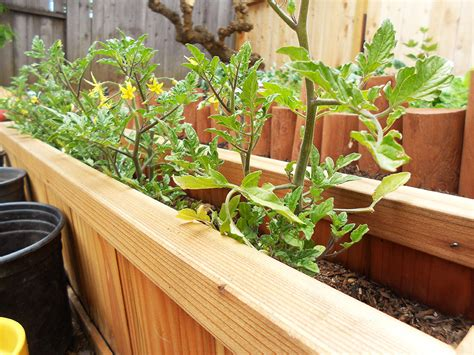 Tomato Planter Boxes by Tomato Planter Box Garden